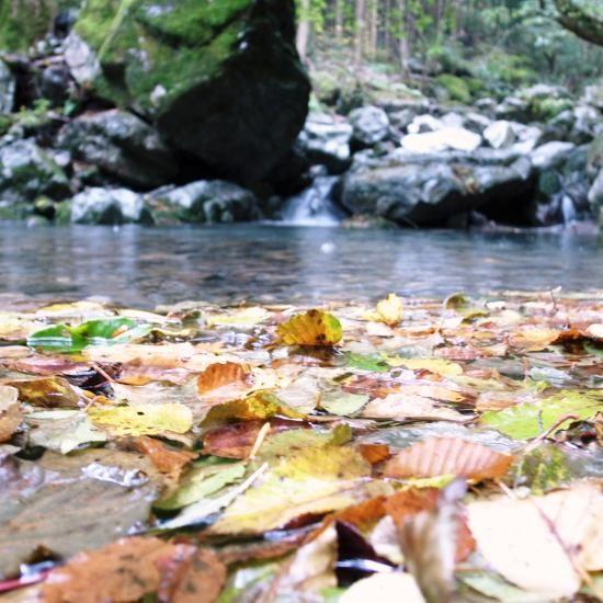 山上ヶ岳 20.OCTOBER 2010